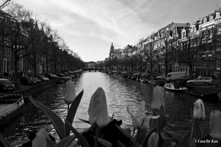 kao_tulips-8217