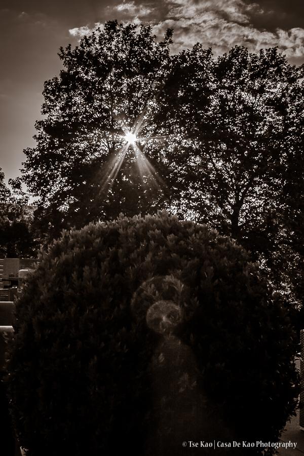 kao-kleve-suntree-1773