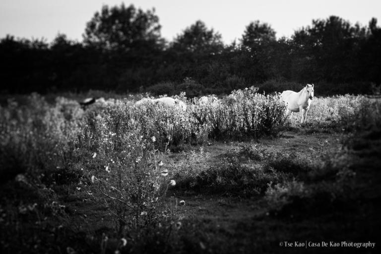 kao-groessen-bloodhorses-0376