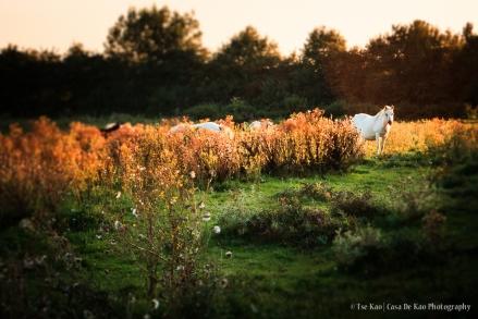 kao-groessen-bloodhorses-c-0376