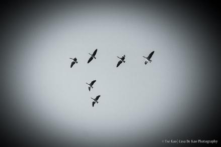kao-groessen-wings-0350