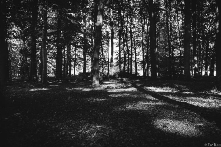 kao-lightdrawingtrees-8403