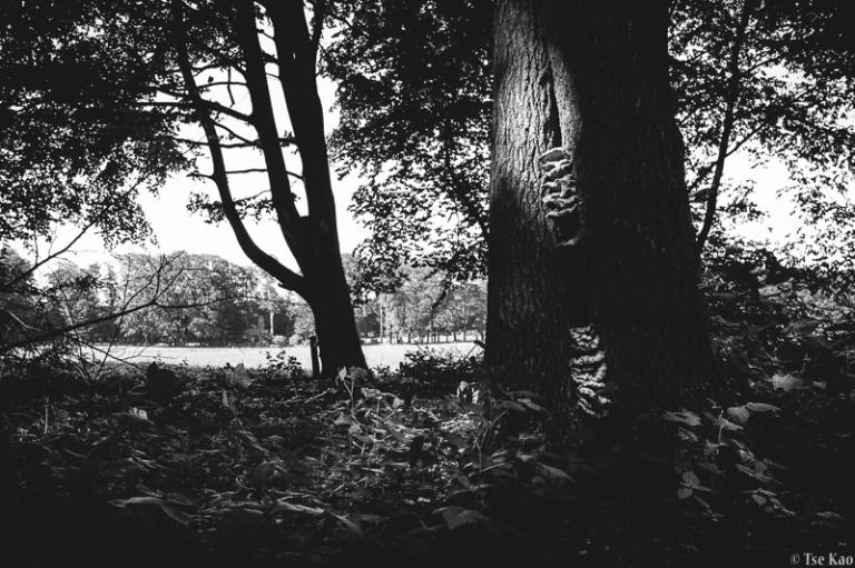 kao-treehousing-8402