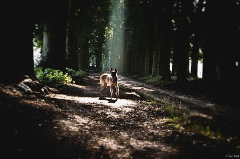 kao-backyard-Goodmorning-1716