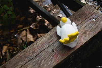 kao-berlin-duck-2390