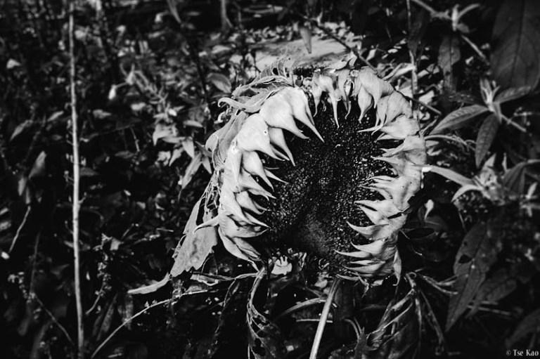 kao-deathofsummer-2867