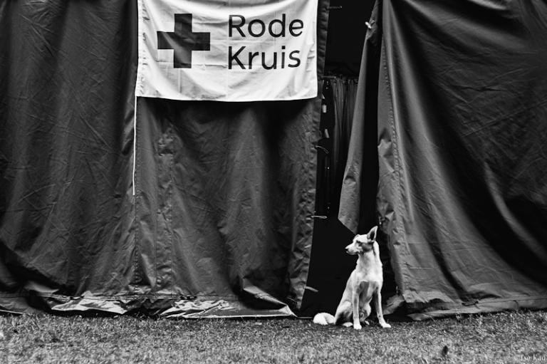 kao-rootsinthewoods-rescuedog-3402