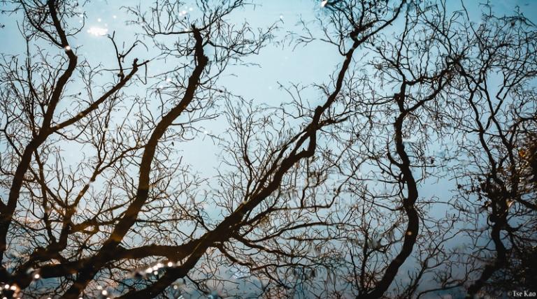 kao-backyard-reflection-7095