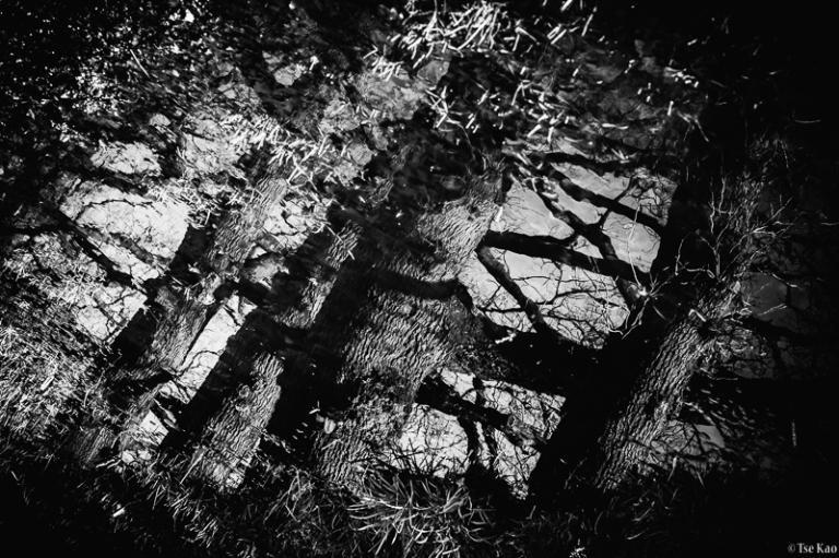 kao-backyard-reflection-7104