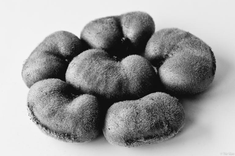 kao-kiwi-