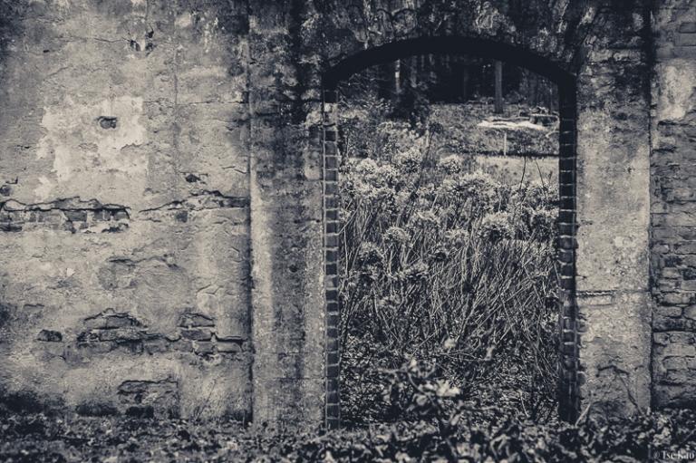 kao-backyard-ruin-7175