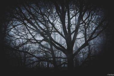 kao-fog-7621
