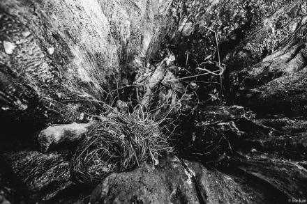kao-backyard-nesting-9368