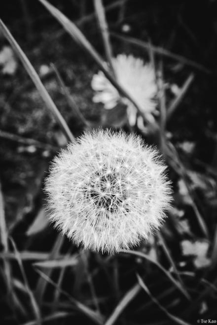 kao-backyard-seeds-9376