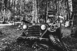 20160624_DTRH_Swamp-9468