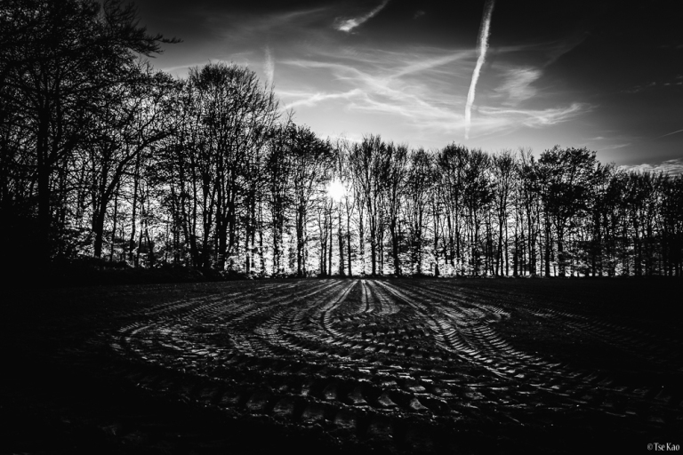 tracks-0615